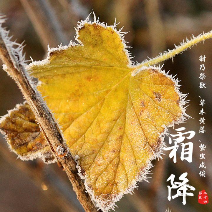24节气 霜降 中国传统节气