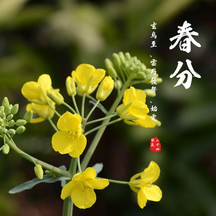 春分 24节气 中国传统节气