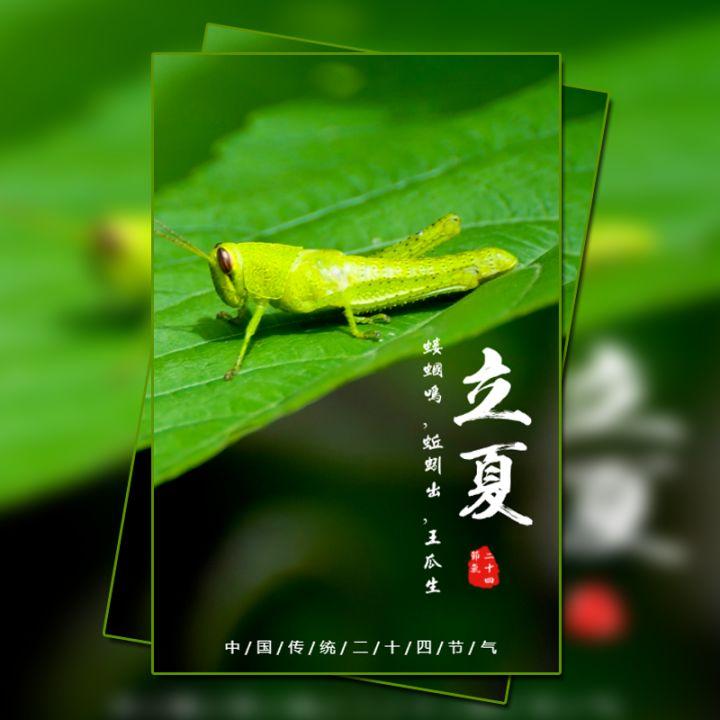 立夏 24节气 中国传统节气