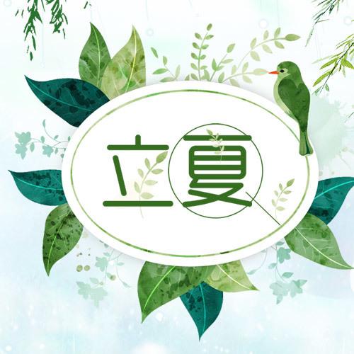 清新立夏 中国传统24节气
