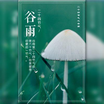 谷雨节气介绍自媒体宣传
