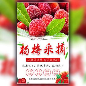 杨梅采摘亲子游自驾游杨梅促销宣传端午礼品