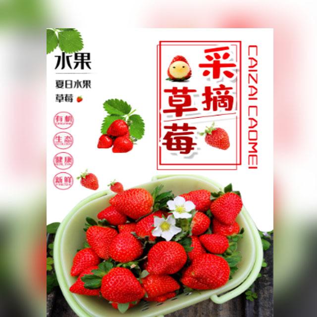 快闪草莓采摘草莓果园草莓山庄绿色食品亲子游农家乐